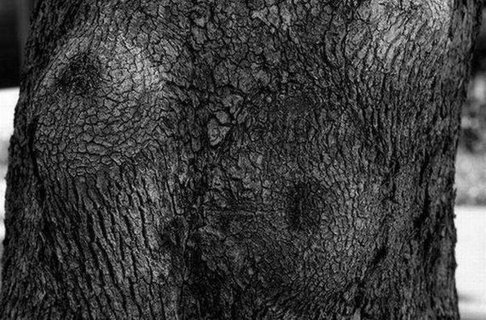 """""""Seksowne"""" drzewa 15"""