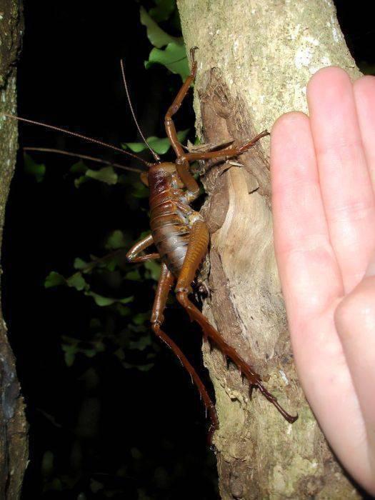 Największe owady 23