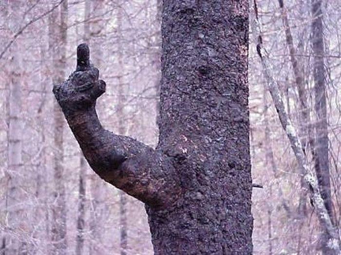 Dziwne drzewa 13