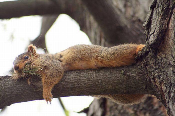 Leniwe wiewiórki 9