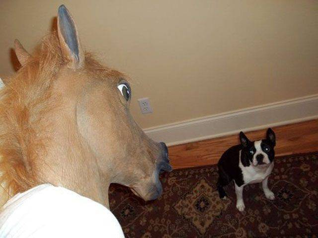 Anonimowe konie 3