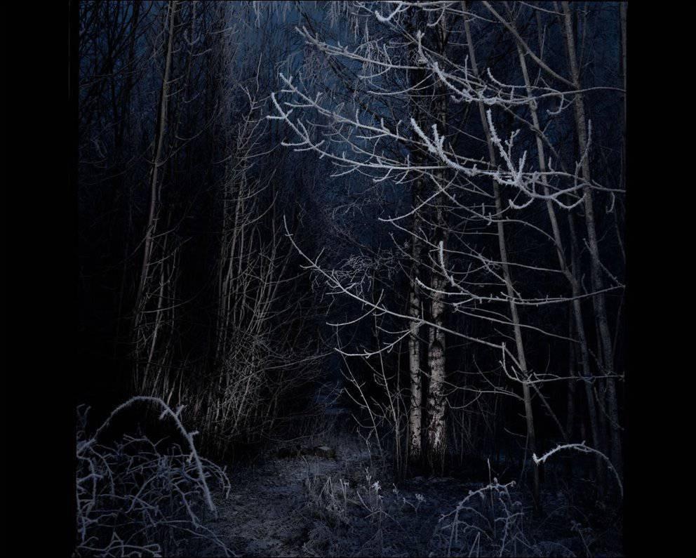 Tajemnicze lasy 6