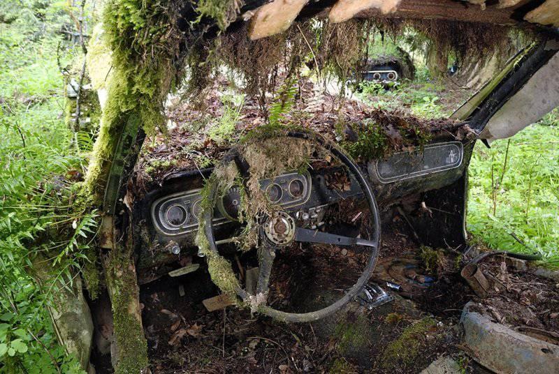Złomowisko w lesie 15
