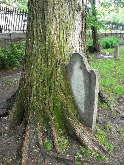 Dziwne drzewa 1