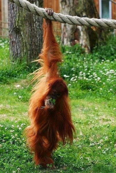 Śmieszne zdjęcia zwierząt 6