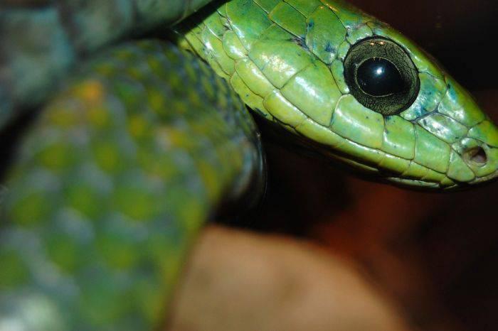 Najgroźniejsze węże 26