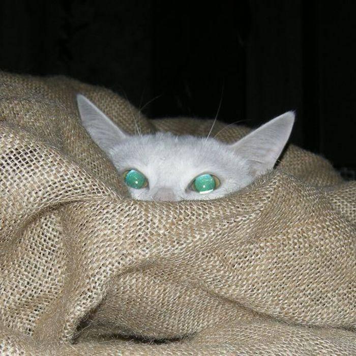 Wszędobylskie koty #2 47