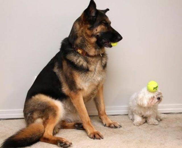 Zabawne zdjęcia psów 40