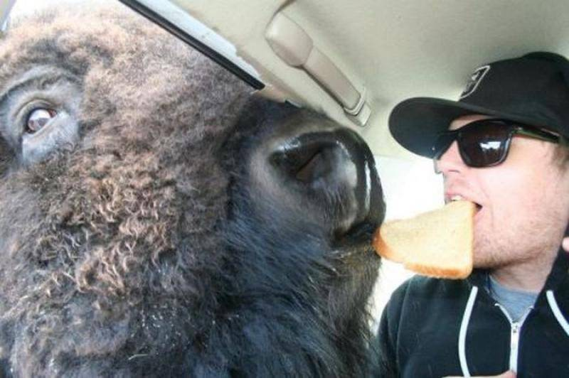 Najdziwniejsze zdjęcia ze zwierzętami 18