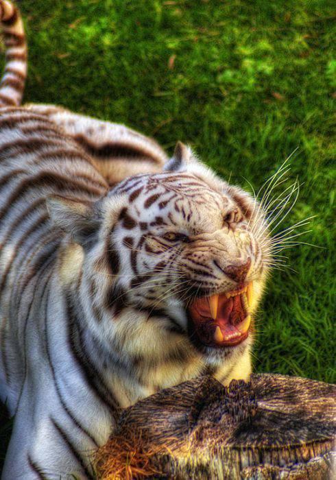 Zdjęcia zwierząt w HDR 22