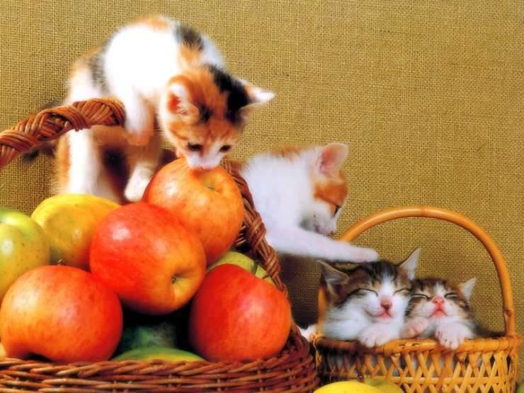 Małe kotki 23
