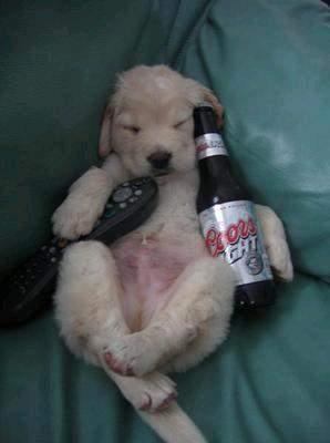 Zwierzaki i alkohol 11