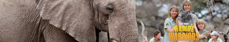 Steve Irwins Wildlife Warriors S01E17 720p HDTV x264-NORiTE