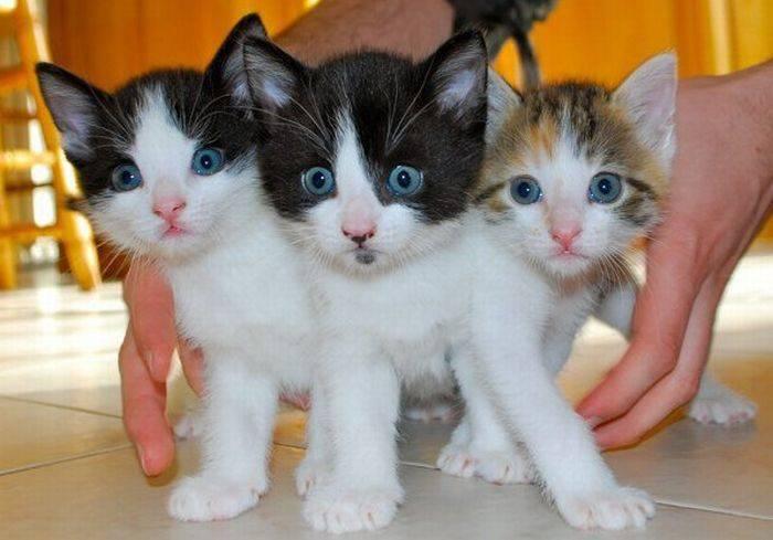 Słodkie kociaki 72