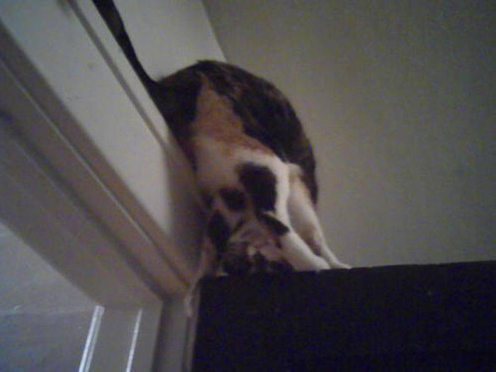 Nieznośne koty 24