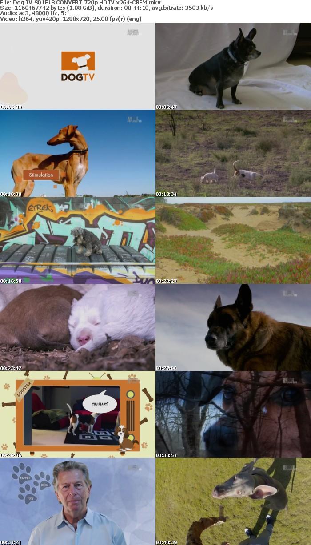 Dog TV S01E13 CONVERT 720p HDTV x264-CBFM