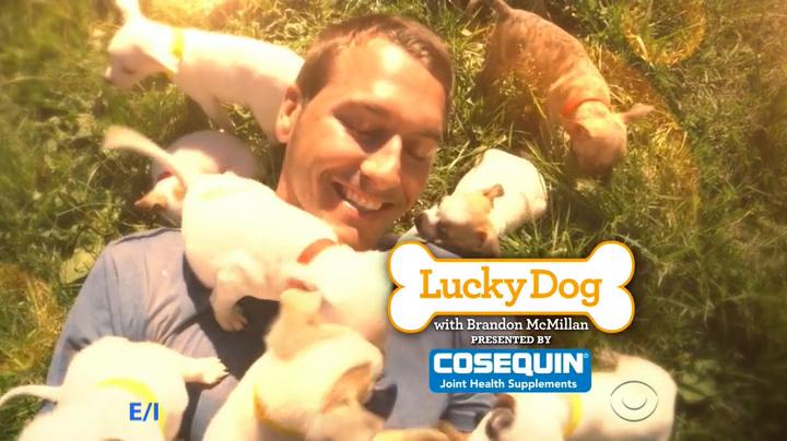 Lucky Dog S06E07 Maddie HDTV x264-W4F