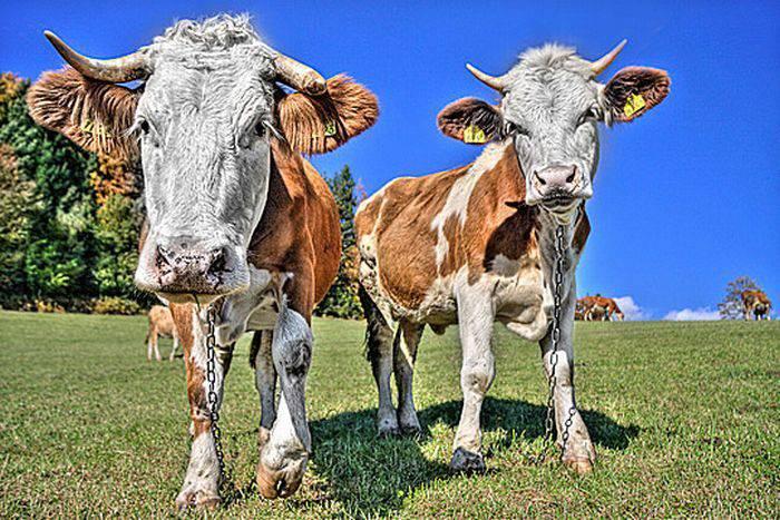 Zdjęcia zwierząt w HDR 3