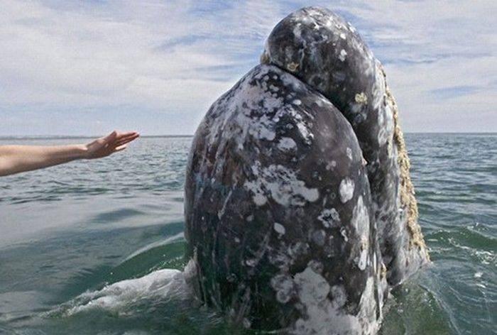 Spotkanie z wielorybem 2