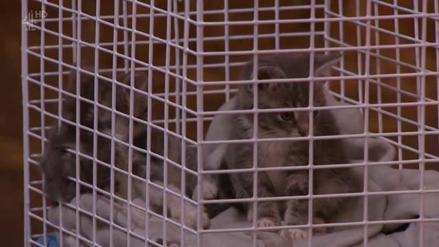 Animal Rescue Live Supervet Special S01E01 XviD-AFG
