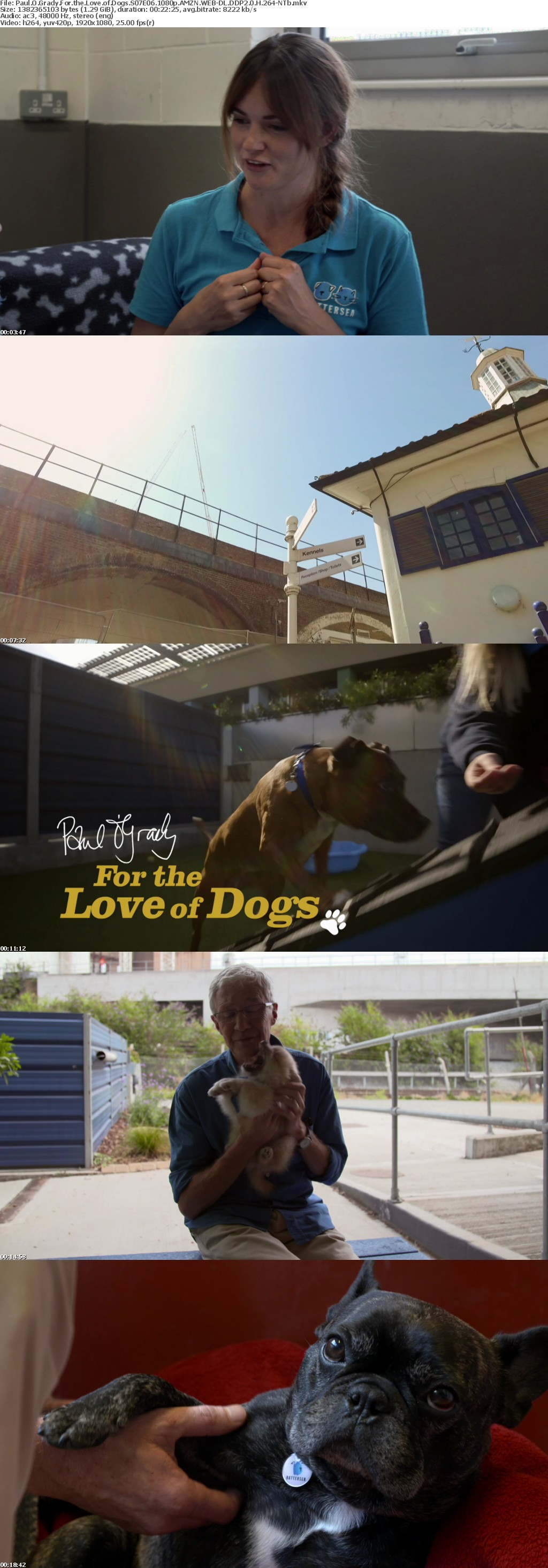 Paul O Grady For the Love of Dogs S07E06 1080p AMZN WEB-DL DDP2 0 H 264-NTb