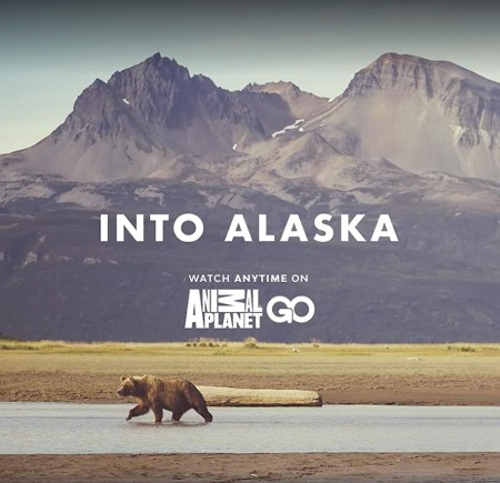 Into Alaska S01E09 Surrounded by Bears WEBRip x264-CAFFEiNE