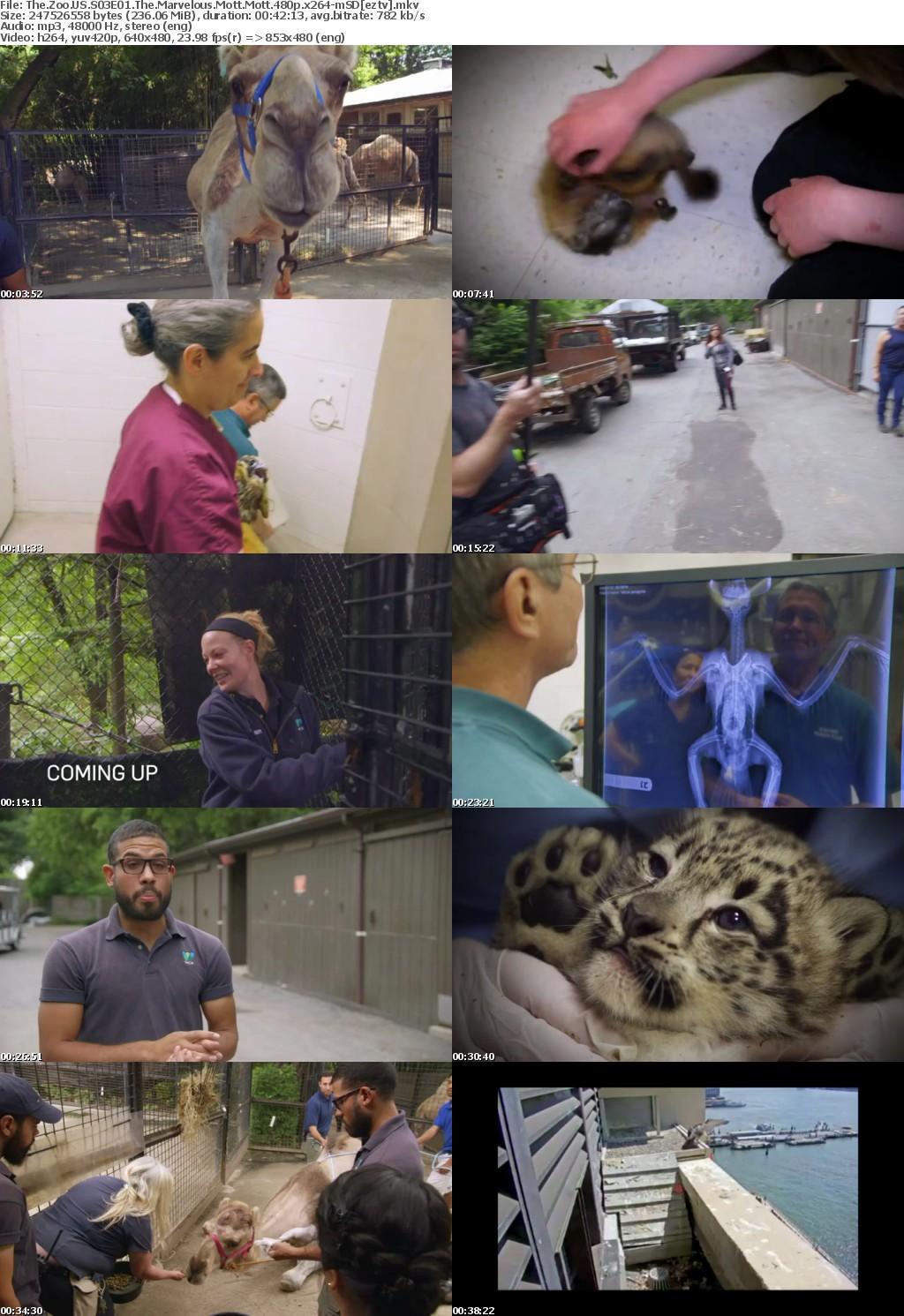 The Zoo US S03E01 The Marvelous Mott Mott 480p x264-mSD