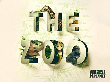 The Zoo US S03E02 A Sea Lion Pup Grows Up 480p x264-mSD