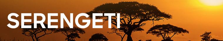 Serengeti S01E02 480p x264 mSD