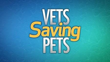 Vets Saving Pets S02E14 The K9s Canine WEB x264-LiGATE