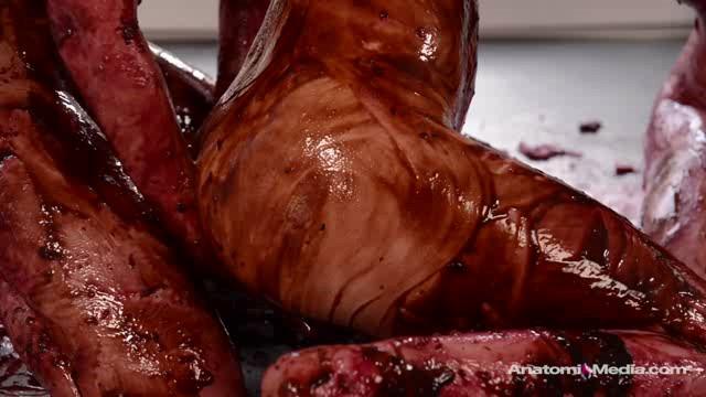 Free Download AnatomikMedia 20 06 05 Veronica Vain Sasha Heart And Katy Kiss Pie Whores XXX XviD-iPT Team